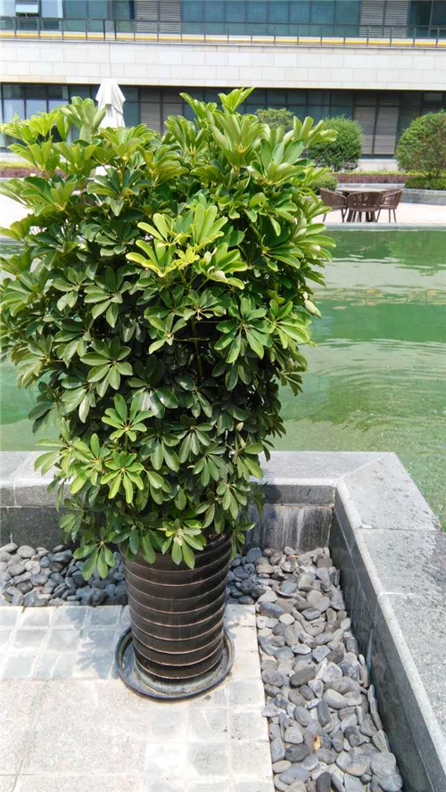 大堂植物摆放效果图